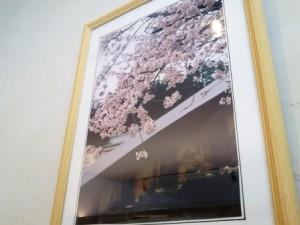 「ぶらり窯元めぐり」ではサクラが毎年きれいです(こちらの写真は前回の様子!)