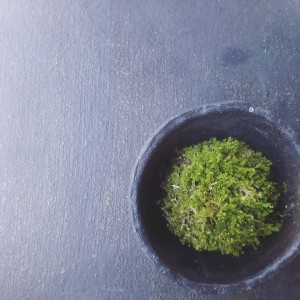 新緑がまぶしい季節