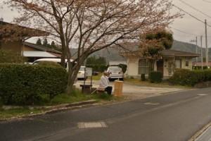 桜の木の下が毎年の定位置。